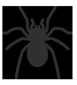 Search Engine Spider